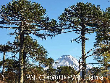 [Translate to Spanisch:] PN-Conguillio-VN-Llaima