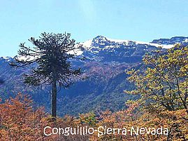 Conguillio-Sierra-Nevada